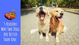 5 Reasons Why Two Dogs Are Better Than One